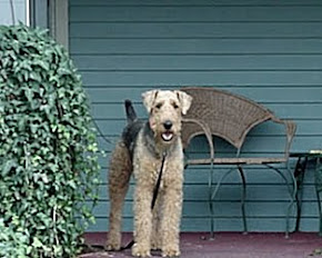 Reagan the Airedale