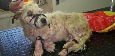 Reprodução/Facebook/Animal Welfare Helderberg