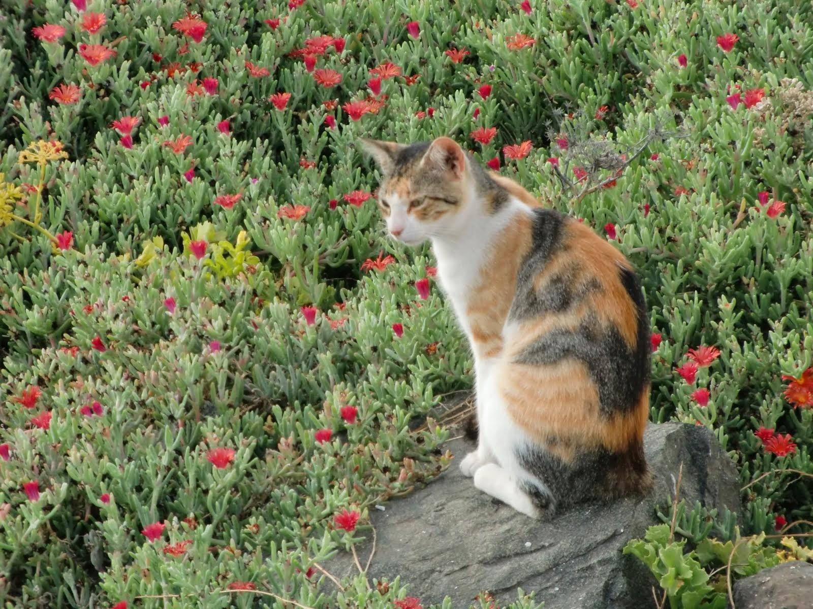 El fauno y basajaun for Alejar gatos del jardin