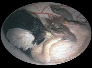 Animal-Womb-Photos-Pictures-Images-Pics