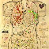 Infográfico del cuerpo humano