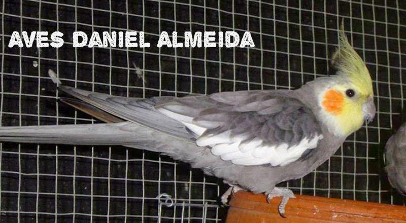 Aves Daniel Almeida