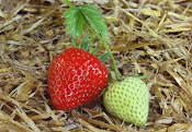 Madurar es de frutas, aprender de personas.