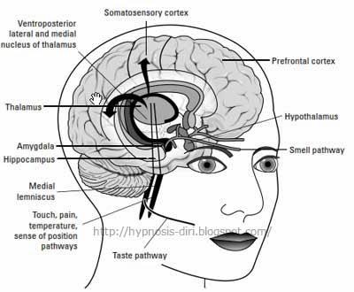 Neuro Linguistic Programming (NLP) - Siri 7 : Post-Traumatic Stress Disorder (PTSD)