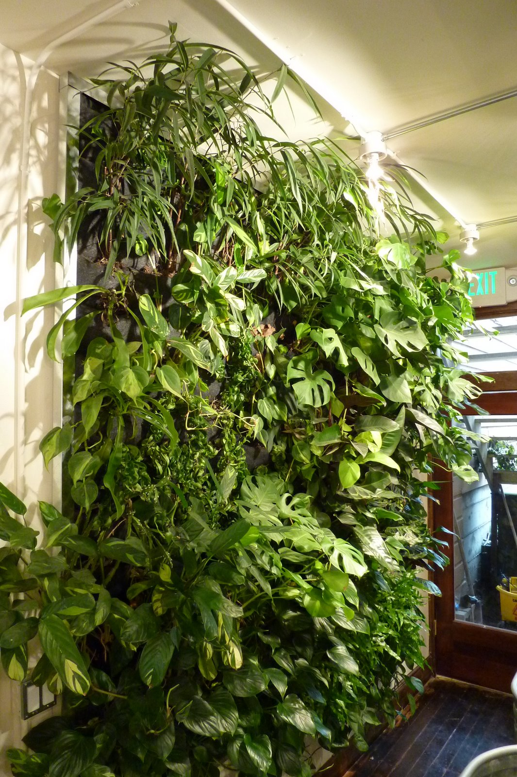 Plants on walls vertical garden systems population 39 s for Living plant walls