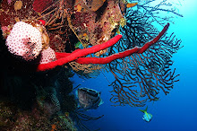 Underwater Roatan