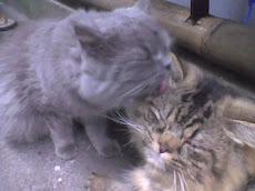 Kucing Garongku