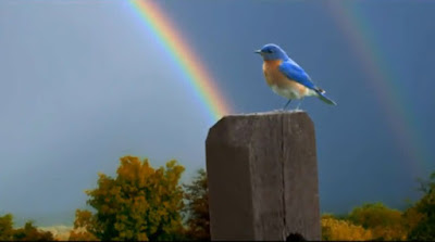 blue bird on post with rainbow in background