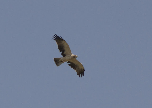 Light Phase, Spain, Costa Blanca, Birding