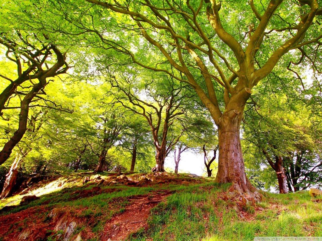 http://2.bp.blogspot.com/-haw1G2JXTyQ/T_VMReTNoTI/AAAAAAAAAq8/N0-zPuIyEzk/s1600/hill_trees-wallpaper-1024x768.jpg