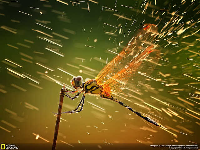 insectos anfibios: