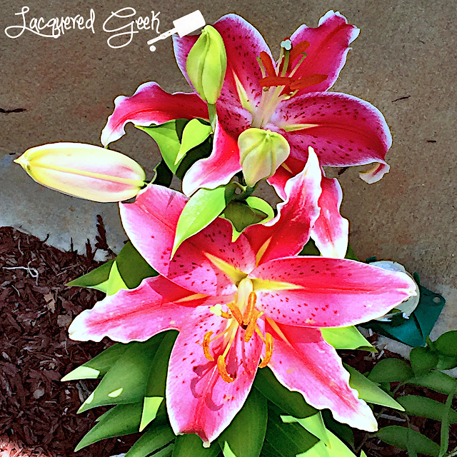 Stargazer Lily by Lacquered Geek