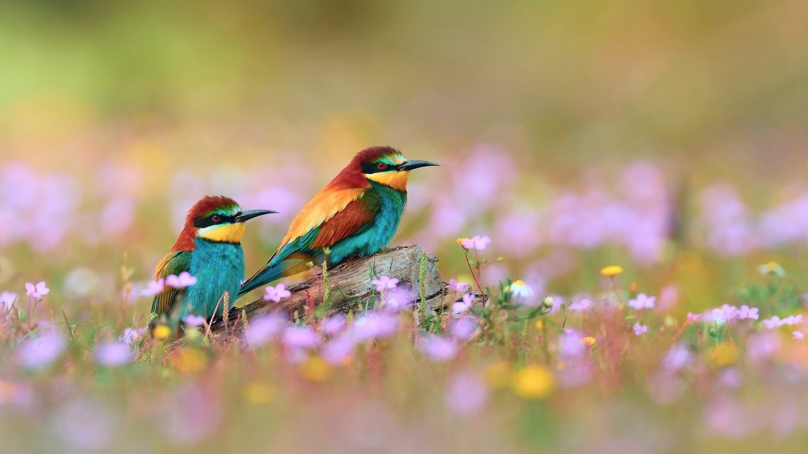 flowers for flower lovers.: Flowers and birds desktop wallpapers.