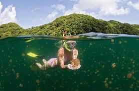 Jezera - Page 2 Jellyfish+Lake%252C+Palau+23