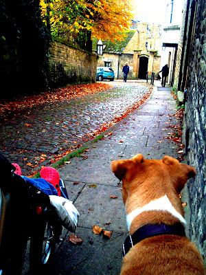 Autumn dog walking