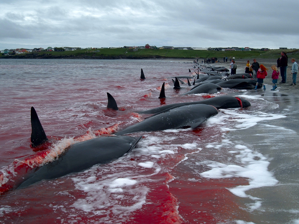 killing of dolphins
