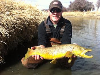 26.5 inch Bear River Brown