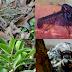 10 انواع تم اكتشافها في 2014