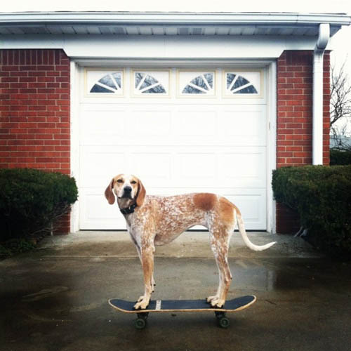 Madie on things - cão - skate