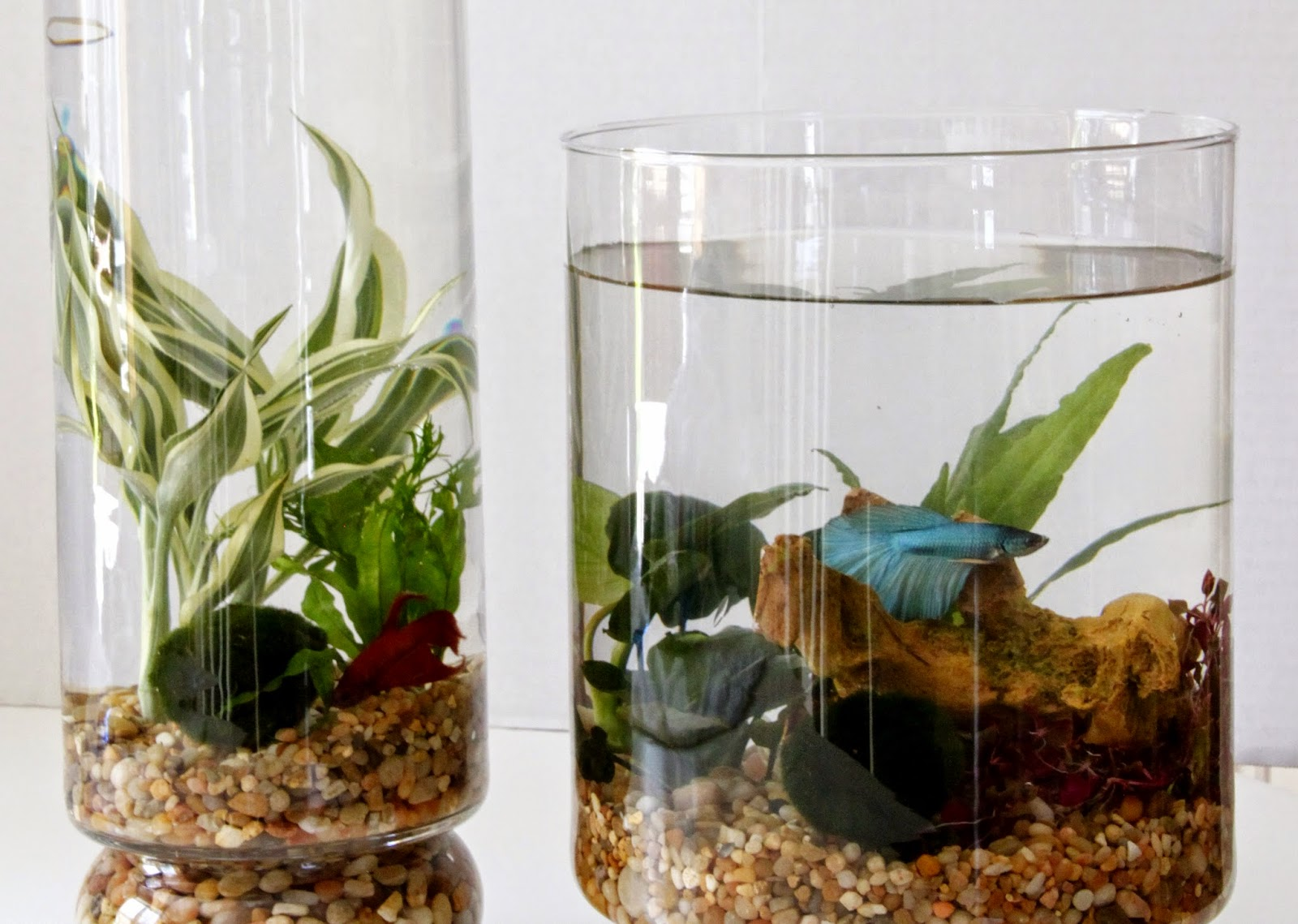 Tilly S Nest Diy Indoor Water Garden