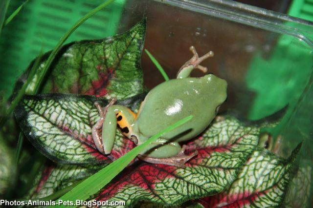 http://2.bp.blogspot.com/-hd2MS8ym_NE/TaBL3I6Hv9I/AAAAAAAAAms/tm7b18QQ5AY/s1600/green%2Bfrog_0003.jpg