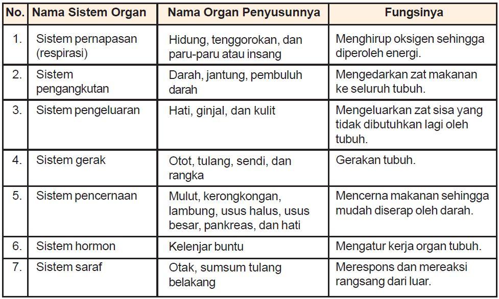 Pengertian Sistem Organ dan Macam-macam Sistem Organ pada ...