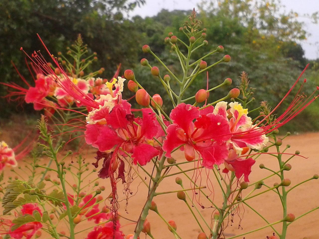 ano todo atraindo beija flores borboletas e abelhas e suas flores
