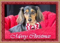 http://www.redbubble.com/people/sassyg/works/10985946-a-very-doxie-christmas-9?c=228724-long-dogs&p=greeting-card