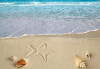 estrella y conchas de mar