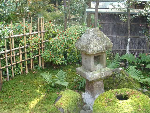 Sophie le berre plantes du japon histoire botanique et for Le jardin japonais sophie walker
