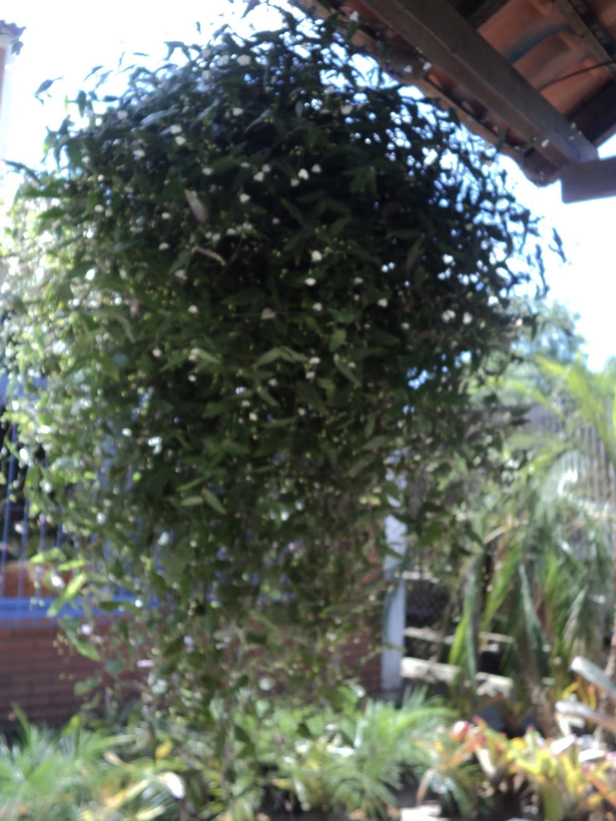 Conhecido Itapuã Natureza : Floricultura e Agropecuária, Vasos e Fontes: Véu  DU31