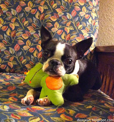 Sinead poses with her frog dog toy from BarkBox