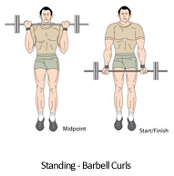 The World of Working Out: Biceps