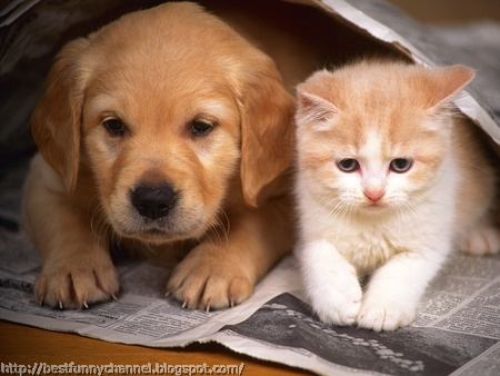 Cute kitten and puppy.