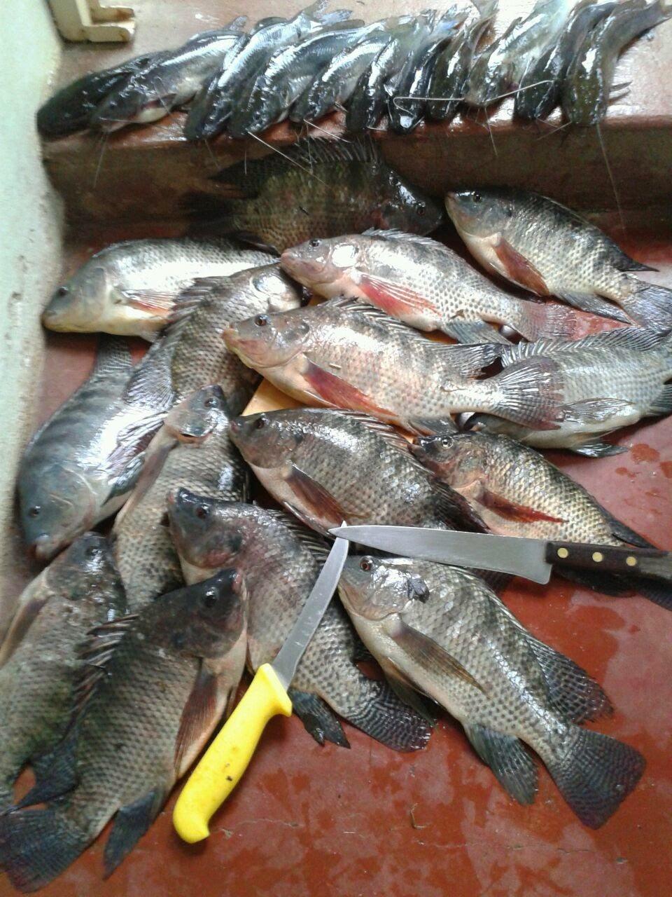 Educar é Ensinar a Pescar...
