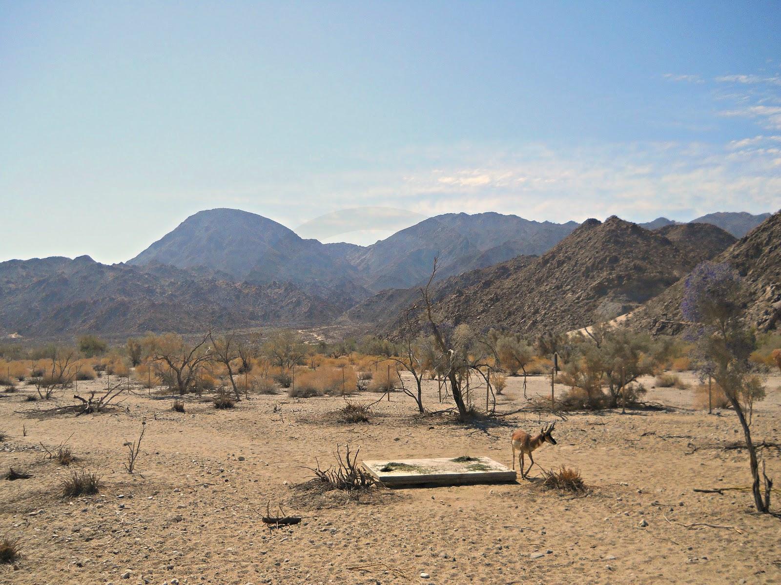 The Living Desert In Palm Desert California