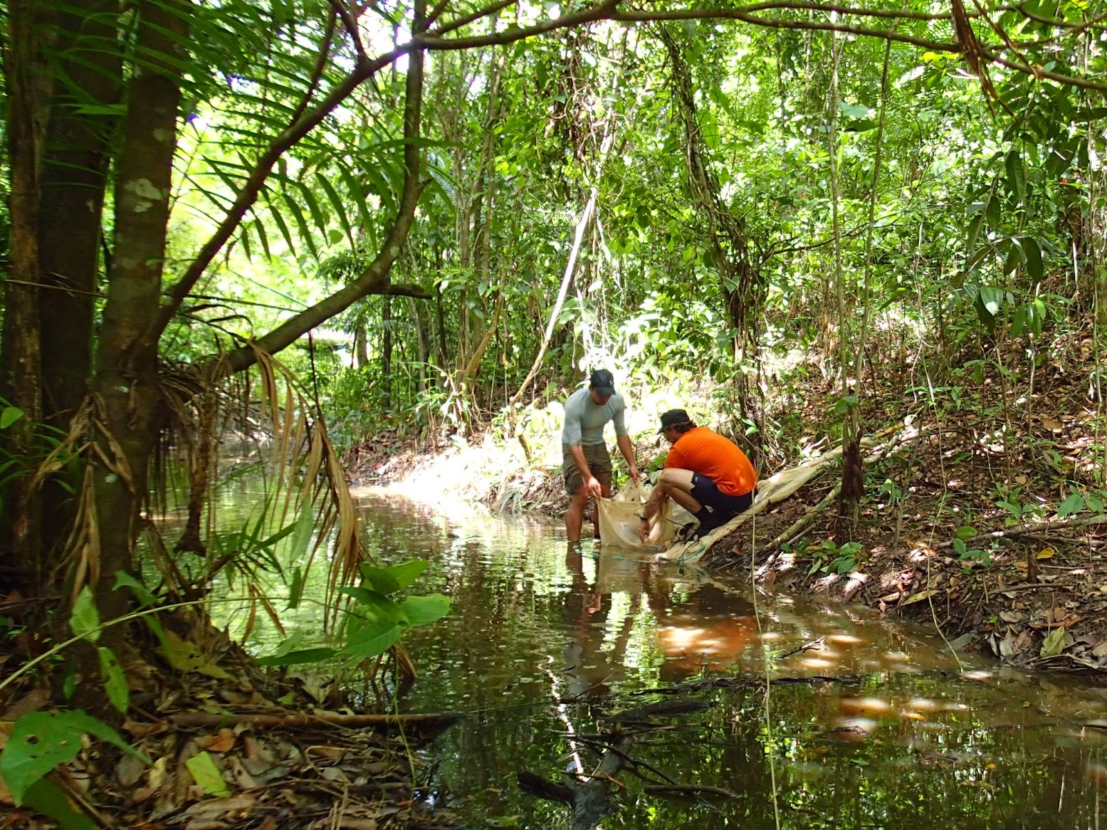 Researchers fishing in streams of Trinidad & Tobago (photo by Fernando)