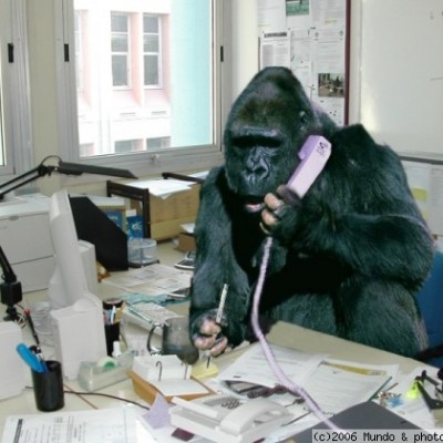 chimp most funny new photos images funny and cute animals