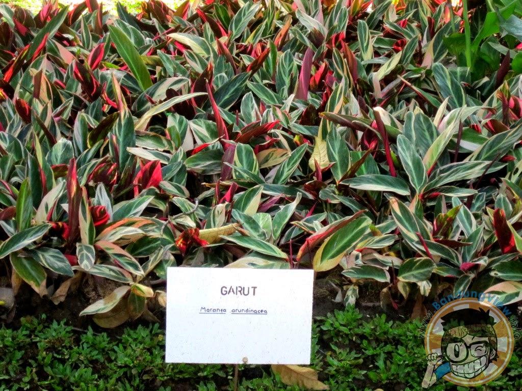 Garut - Taman pustaka bunga kandaga puspa