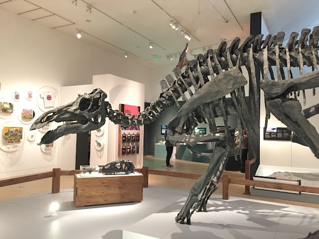 A large dinosaur skeleton