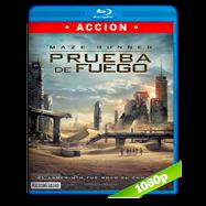 Maze Runner: Prueba de fuego (2015) Full HD 1080p Audio Dual Latino-Ingles