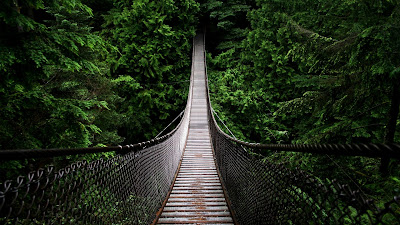 Suspension Bridge Between Trees Lynn Canyon HD Wallpaper