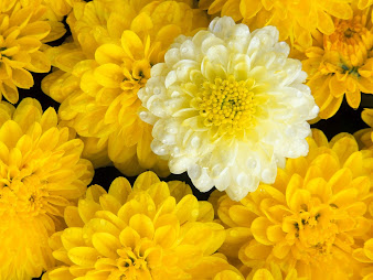 #2 Amazing Flowers Wallpaper flowers wallpaper