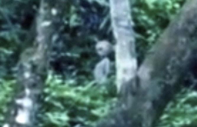 Brezilya'nın Amazon ormanlarında bulunan Manaus'ta çekilen bir videoya yansıyan uzaylı canlıya ait görüntüsü.