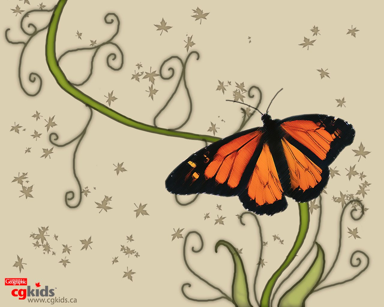 Butterfly Wallpaper - Butterfly Pict