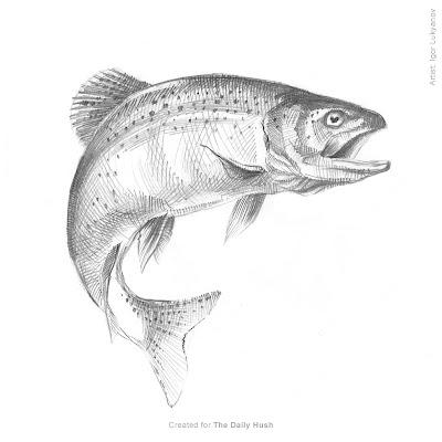 croquis de poisson, dessin d'un truite qui saute de l'eau