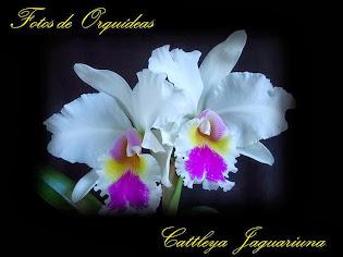 Fotos de orquídeas. Album nº-2
