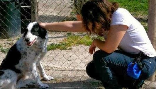 Addestramento ed educazione dei cuccioli e del cane adulto il chihuahua che fa la pip a letto - Cane pipi letto ...