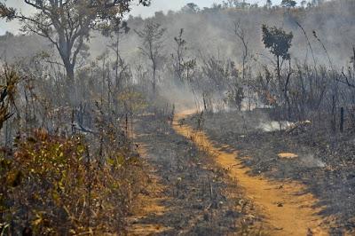 Cerrado em chamas, Brasília. Foto: Agência Brasil.
