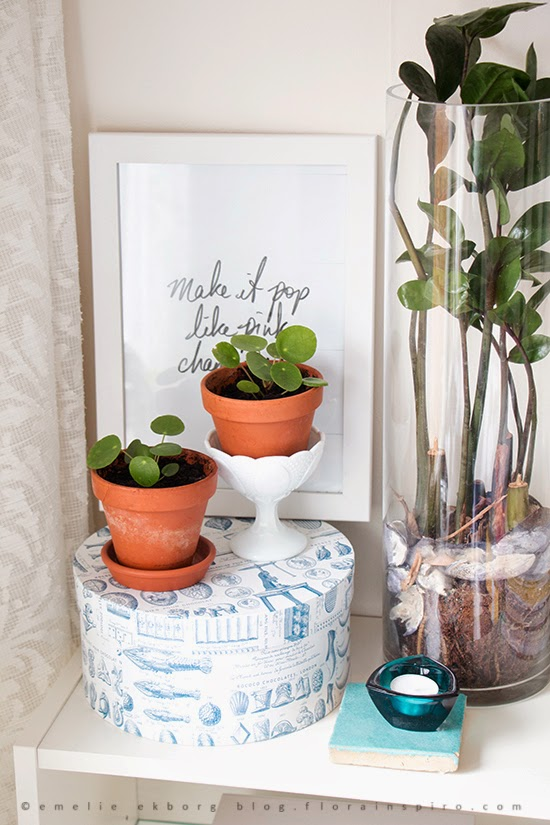 pilea, green plants, my plant shelfie, urban jungle bloggers, bright bazaar, jamie oliver, cats and plants